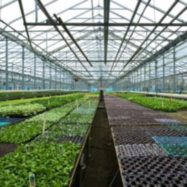 Greenhouse Benching Bfg Supply