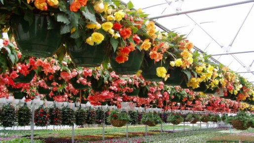 With A Growing Variety Of Containers From HC Companies, Landmark, Nursery  Supplies, ...