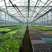 Greenhouses & Benching