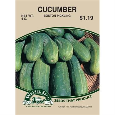 Cucumber, Boston Pickling - 4 Gram | BFG Supply