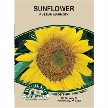 Sunflower, Russian Mammoth 4 Gram | BFG Supply