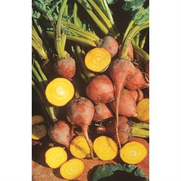 Beets, Golden Detroit 4 Gram | BFG Supply