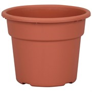 DLN 06.00 COLOR POT TL  CL 98/CS SEASONAL 66CS/PL