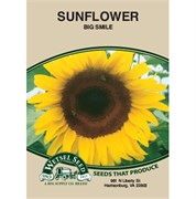 Sunflower, Big Smile 590Mg
